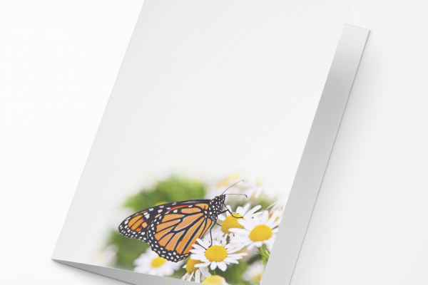Rouwkaart Vlinder op Margriet